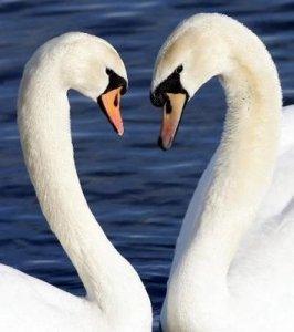 Monogamy-SWANS
