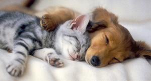 puppy snuggles